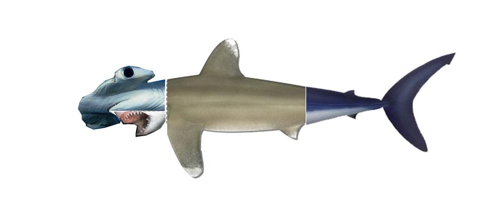 Sharkvolution_photo